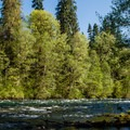Alder along the bank waiting to catch a backcast.- McKenzie River: Paradise to Blue River