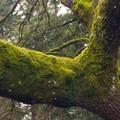 Unidentified moss (help us identify it by providing feedback).- Mount Tabor