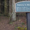 The Angel's Rest Trailhead.- Angels Rest + Foxglove Way Hike