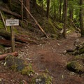 The trail to Proxy Falls.- Proxy Falls Hiking Loop