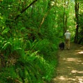 Heading up the Shelter Trail before reaching the Marquam Trail.- Marquam Nature Park + Trail