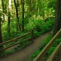Marquam Trail.- Marquam Nature Park + Trail