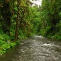 Abiqua Creek.- Abiqua Falls