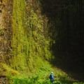 Looking up at the basalt amphitheater at Abiqua Falls.- Abiqua Falls