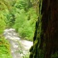 Looking down Butte Creek.- Butte Creek Falls Hike