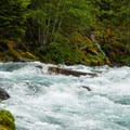 Debris from a recent storm chokes off the center line of Fish Ladder.- McKenzie River: Olallie to Paradise