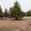 A typical large campsite.- John Day River: Clarno to Cottonwood Bridge