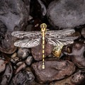 A dragon fly grounded by rain waits for a sunbreak and dry wings.- John Day River: Clarno to Cottonwood Bridge