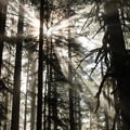 Sunlight streaming through the firs along the Spencer Butte Trail.- Spencer Butte Hike