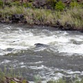 Clarno Rapids, Class III.- John Day River: Clarno to Cottonwood Bridge