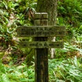 Take a right to stay on Trail #400 across Gorton Creek.- Gorge Trail #400 Hike