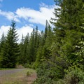 Travel down NF-365 to find the Gold Point Trail that leaves from the left.- Gold Point Trail