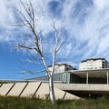 Split, by artist Roxy Paine with PACCAR Pavilion behind.- Olympic Sculpture Park