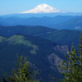 View to Mount Adams (12,280') at higher elevation.- Mount Defiance Hike