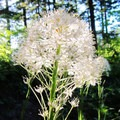 Wildflowers along the trail.- Mount Defiance Hike