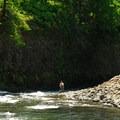 An angler along the Wilson River.- Wilson River, Footbridge Day Use Area