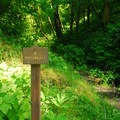 Sign marking the trailhead for Bridge Creek Falls.- Bridge Creek Falls