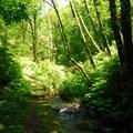 Bridge Creek.- Bridge Creek Falls