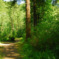 One of the campground's many interconnecting trails.- Keenig Creek Campground