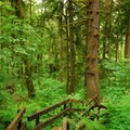 Old-growth forest of Sitka spruce and western hemlock.- Cathedral Tree Hike
