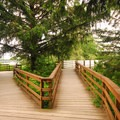 Boardwalk along the Lewis and Clark (Netul) River.- Netul River/South Slough Loop Trail