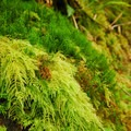 Moss-adorned rocks along the South Slough Trail.- Netul River/South Slough Loop Trail