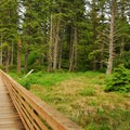 Footbridge across Beards Hollow.- Cape Disappointment State Park