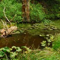 Marsh at Beards Hollow.- Cape Disappointment State Park
