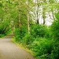 Discovery Trail near Beards Hollow.- Cape Disappointment State Park