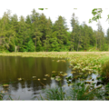O'Neil Lake.- Cape Disappointment State Park
