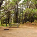 Typical car/tent site.- Cape Disappointment Campgrounds A, B + C