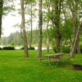 Campsite under the shade of red alders next to O'Neil Lake.- Cape Disappointment Campground D