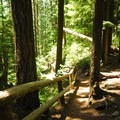 Trail down to the lower viewpoint.- Salt Creek Falls