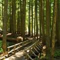 Trail leading toward Diamond Creek Falls.- Salt Creek Falls