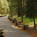 Short paved path toward the spring viewpoint.- Metolius River Spring