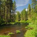 Metolius River from Smiling River Campground.- Metolius River Trail