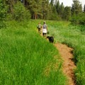Metolius River Trail.- Metolius River Trail