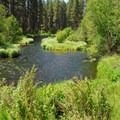 Metolius River.- Metolius River Trail