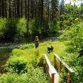 One of the Metolius River's small and accessible islands.- Metolius River Trail