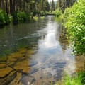 The Metolius River just north of Allingham Bridge.- Metolius River Trail