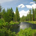 Looking north down the Metolius River.- Allen Springs Campground