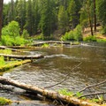 The Metolius River from Pioneer Ford Campground.- Pioneer Ford Campground