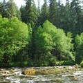 View of the Clackamas River from the Upper Campsites.- Clackamas River, Upper Campsites