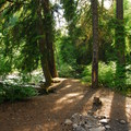 Clackamas River Upper Campsites.- Clackamas River, Upper Campsites