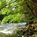 Clackamas River at Riverside Campground.- Riverside Campground