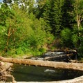 Oak Grove Fork of the Clackamas River.- Ripplebrook Campground