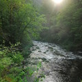 Roaring River adjacent to campground.- Roaring River Campground