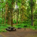 Typical campsite.- Roaring River Campground