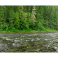The Clackamas River from the southern end of the campground.- Lazy Bend Campground