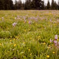 Wildflowers and vast meadows.- Lookout Mountain from High Prairie